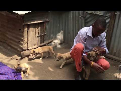 Xxx Mp4 Kijana Mtunza Mbwa Arusha 3gp Sex