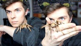 5 Reasons Tarantulas Make Awesome Pets!
