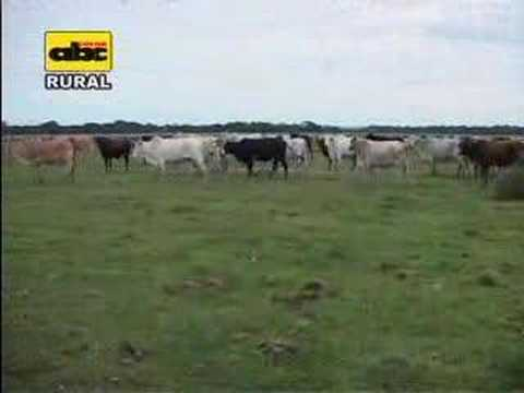 Cría de ganado en suelos pobres