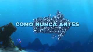Buscando a Nemo 3D - Tráiler Oficial 2- Español Latino