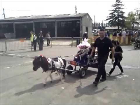 London Harness Horse parade 2014