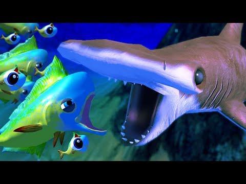 Xxx Mp4 MAHI MAHI Vs HAMMERHEAD SHARK Feed And Grow Fish Part 51 Pungence 3gp Sex