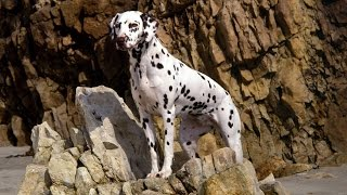 Top 10 Fastest Dog Breeds
