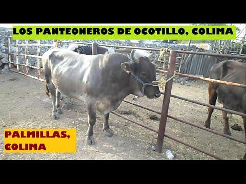 Xxx Mp4 ¡¡HIZO DE LAS SUYAS EL FARAÓN Los Panteoneros En Palmillas Colima 2016 3gp Sex