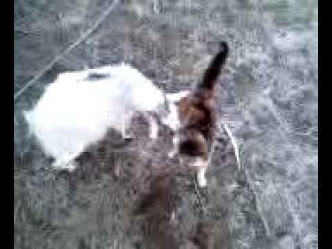 Xxx Mp4 Goat And Cat Having Sex 3gp Sex