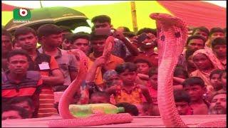 Jinaidah Snake |  Shimul | 10Sep17