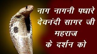 Devnandi Sagar Ji Maharaj.... गुरुदेव के मंगल दर्शन को पधारे नाग नागिन की भव्य जोड़ी ।