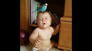 Cute Babies and Parrot Videos 2017