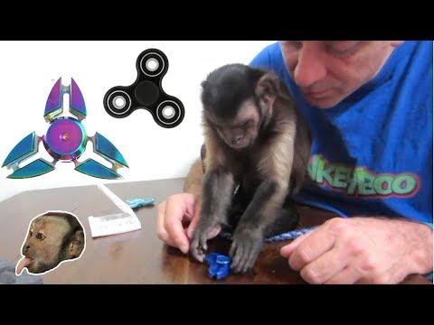 Xxx Mp4 Monkey Fidget Spinner UnBoxing Review 3gp Sex