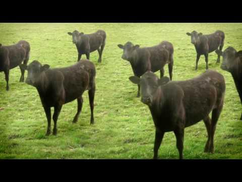 Xxx Mp4 Cows Cows Cows 3gp Sex