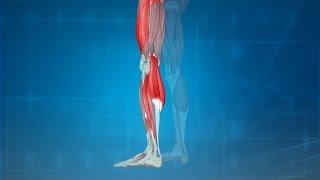 Leg Cramps: Treatment, Causes, Prevention