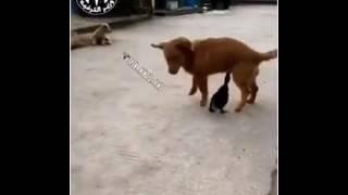 pato pica cosita al perro