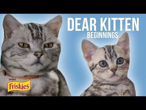 Dear Kitten Beginnings Presented By BuzzFeed & Friskies