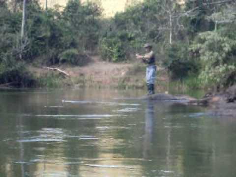 Pesca Piau na Boia de madeira