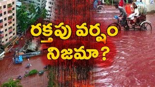Kerala red rain phenomenon was a blood rain||కేరళ రక్తపు వర్షం నిజమా?