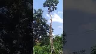 Homem Cai de cima de Árvore