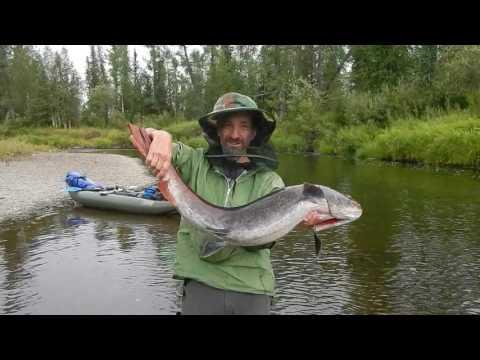 рыбалка приток енисея