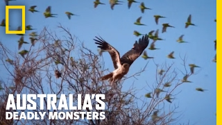 The Battle of the Birds | Australia's Deadly Monsters