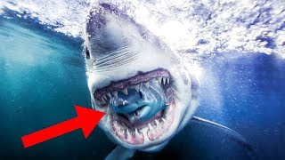 Most UNBELIEVABLE Shark Behavior!