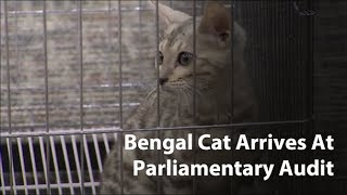 Confused Bengal cat arrives in lawmakers meeting