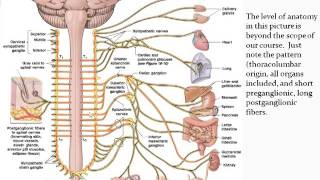 Chapter 14 - Autonomic Nervous System - Part 1