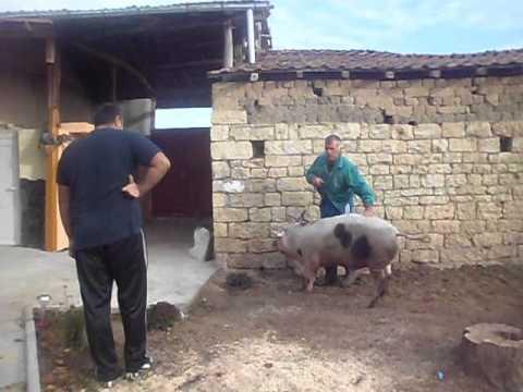 kolene na prase selo dolna studena trqvna
