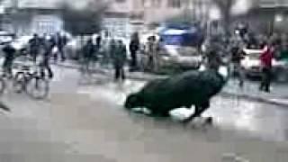 عجل الاضحية يقتل صاحبه  في غزة.3gp