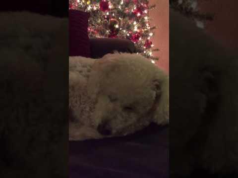 Xxx Mp4 Girl Sings Dog To Sleep 3gp Sex
