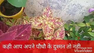 NO-124 कही आप अपने पौधौ के दुश्मन तो नही/common mistakes done by plant lovers (Hindi/Urdu)