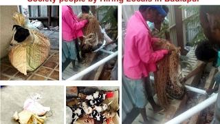 Animal Cruelty in Badlapur / Konark Garden Society/ Animal Brutality