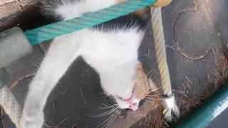 Esnemekten usanmayan kedi
