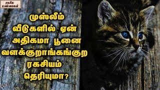 Spiritual Benefits Of Keeping A Cat In Islam For Mental Wellness || Unknown Facts Tamil