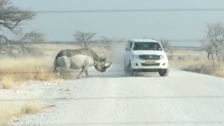 Rhino Attacks SUV Full Of Tourists