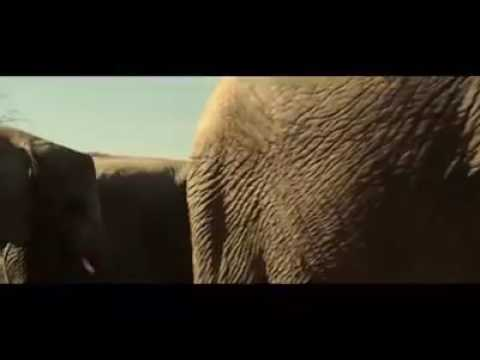 Xxx Mp4 Wow Elephant Fucking Funny Video Just For Laughing 3gp Sex