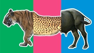 Wrong Heads Wild Animals! Match Up Game Animals Buffalo Camel Cheetah Tiger Learn Animal for Kids