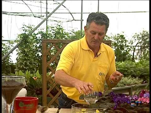 El Jardinero en casa La Violeta Africana