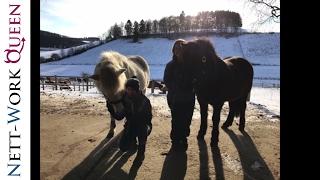Forest Jumper 2017 Horseparty im Winter
