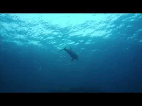dolphins having sex