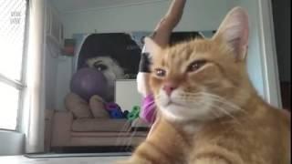 เจ้าแมวเมียว อย่าแย่งซีนสิ กำลังโชว์เลย