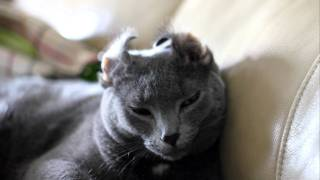 Silvy Kitty - Everything Is Louder With My Ears Folded Open!