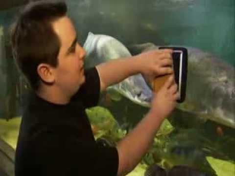 John Marcus Monstrous 10 000 Gallon Aquarium