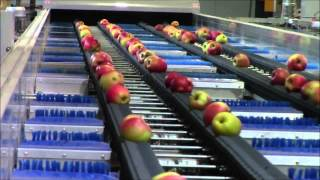 Apple packing and presorting line