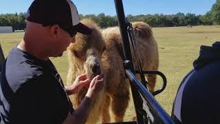 Franklin Drive Through Safari