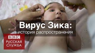 Вирус Зика: история распространения