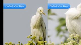 Birds of Bengal