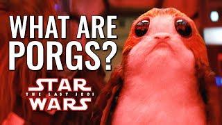 What are Porgs? - Star Wars: The Last Jedi