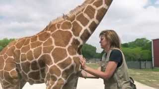 Rare Giraffe Twins Celebrate First Birthday
