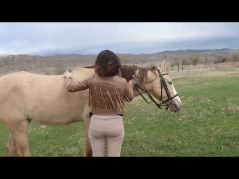 Xxx Mp4 Wonderful Beautiful Girl And Cute Horse Making Love 3gp Sex