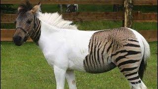 أغرب 10 حيوانات مهجنة في العالم
