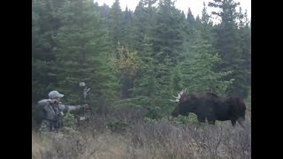 Coolest Moose Hunt Ever With Compound Bow. HD